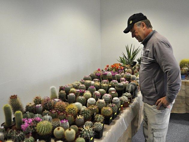 Tradiční výstava kaktusů u přerovského výstaviště
