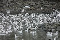 V sobotu 22. listopadu pořádají ornitologové poslední letošní exkurzi