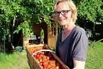 Samosběr jahod v Bochoři
