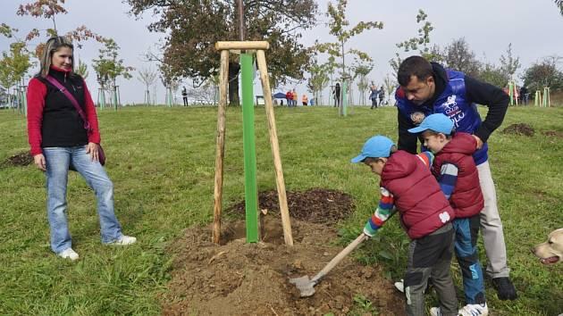 Sázení stromků v Libosadu Malý Noe v kdysi věhlasných Knejzlíkových sadech v Předmostí u Přerova.