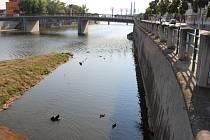 Vody ve Strhanci je také málo, kachnám to ale zatím stačí.
