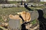 Na přerovském výstavišti se ve velkém kácejí stromy