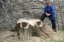 S originálním nápadem, jak oživit opuštěný pařez jasanu za farním kostelem v Komenského sadech, přišli v Lipníku nad Bečvou. Ze zbytků pokáceného stromu vysochali tvůrci malé umělecké dílo – u chobotnice se teď zastavují návštěvníci.