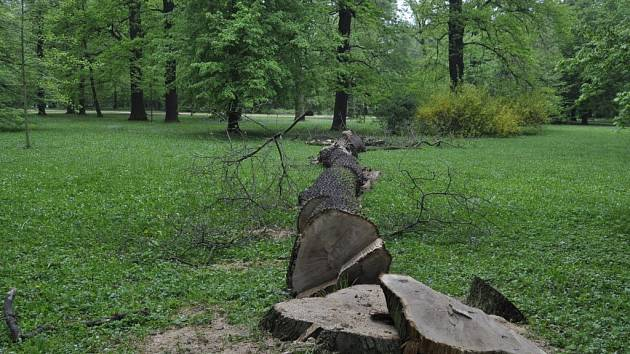 Kácení v parku Michalov