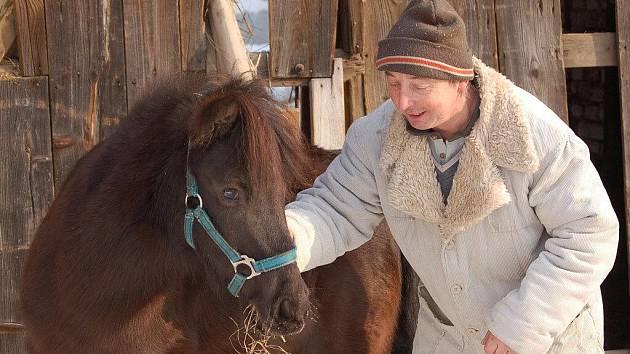 Ani v chladném počasí nezůstávají koně v Radkově Lhotě ve stájích. Cesty sněhem jim ale musejí prošlapávat lidé, o svrchní propadající se vrstvu ledu by se totiž koně mohli pořezat.