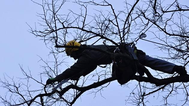 Ořezy přestárlých a poničených dřevin provádí v těchto dnech v Přerově stromolezec Jiří Tesař