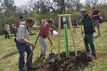 Obnovit slavné Knejzlíkovy sady v Předmostí se rozhodlo město ve spolupráci s Nadací Malý Noe. Pro mnohé Přerovany bylo čtvrteční odpoledne, kdy si mohli vysázet svůj strom, historickým okamžikem.