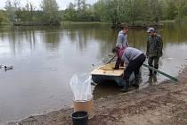 Odbahnění přírodního koupaliště Laguna v Přerově probíhá šetrnější formou - aplikací speciálního přípravku na vodní plochu.