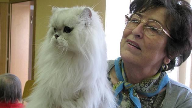 Výstava koček v lipnické knihovně