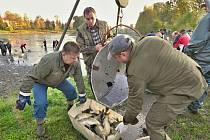 Výlov hranického rybníku Kuchyňka