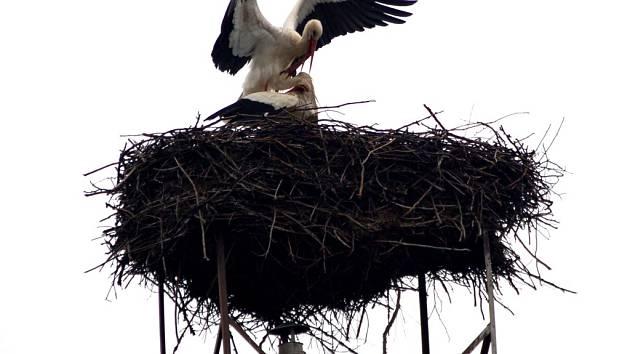 Čapí pár už obsadil hnízdo na komíně v Oseku nad Bečvou.