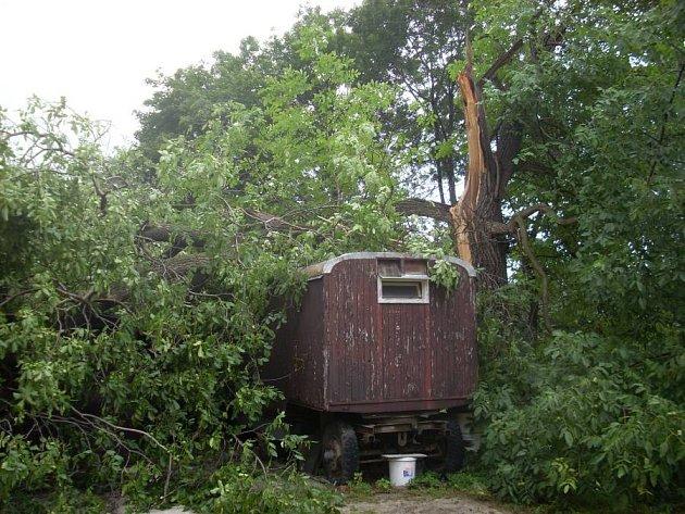 Stoletý ořešák v Hranicích v jedné ze zahrad Pod Křivým nevydržel prudký náraz deště a větru