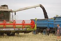 Sklizeň řepek dokončovali včera zemědělci z Rokytnice.