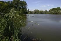 Rybník Raška u Hrdibořic