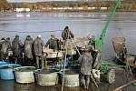 Výlov hustopečského rybníka opět přilákal velký počet návštěvníků.