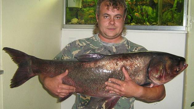 V neděli 4. října v 10 hodin byl na Velké Laguně zdolán tolstolobik o délce 109 cm a váze 18 kg. Šťastným rybářem byl Petr Vašek.
