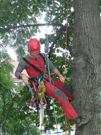 Zásah arboristů vkorunách hranických stromů