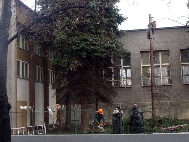 V areálu školy bude kvůli rekonstrukci budovy skáceno patnáct stromů.