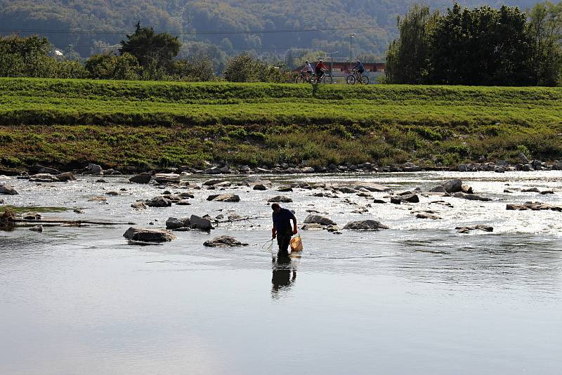 Odstraňování následků masivního úhynu ryb v řece Bečvě v Hranicích, pondělí 21. září 2020
