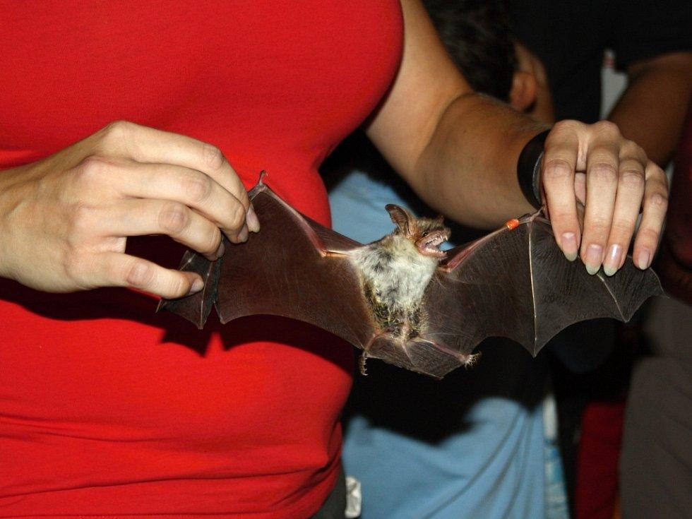 Noc netopýrů v Hranicích