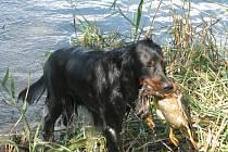 Psi skládali zkoušky při norování i ve vodě.