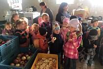 Jablíčková sezona v MŠ Čtyřlístek Milenov