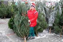 Prodej vánočních stromků v Hranicích