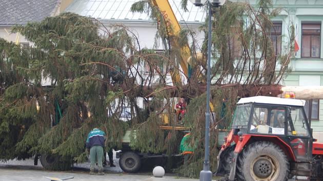 Vánoční strom přivezli pracovníci technických služeb v sobotu odpoledne.