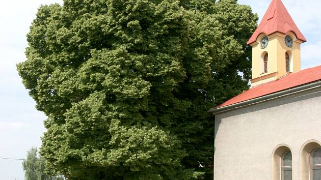 Stojanova lípa v Beňově.