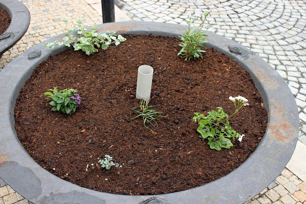 Květinová výzdoba na zrekonstruovaném náměstí v Hranicích - 13.  květen 2021.