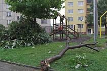 Spadlý strom.