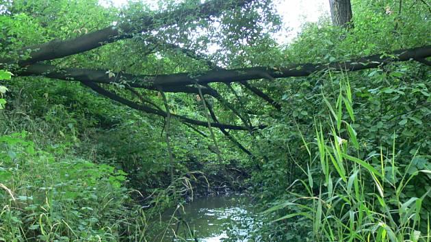 Hranický potok vyhlíží divoce.