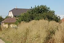 Město Přerov se nestará o zarostlé pozemky v Kozlovicích, na kterých má vyrůst šest rodinných domů. Foto: Dagmar Rozkošná