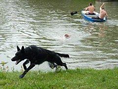 Tři výstřely, řeka, pes a psovod. Přepad přes Bečvu je typicky hranickým závodem, při kterém má pes za úkol přeplavat řeku, zaútočit na figuranta a vyčkat příchodu psovoda.