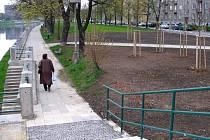 Pět set stromů se ročně vykácí přímo v Přerově.