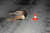 Řidiči vběhlo lesní zvíře do cesty z levé strany a střetlo se s přední částí autobusu.