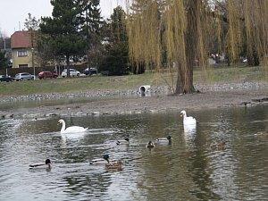 Hranický rybník Kuchyňka