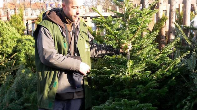 Lidé už zkupují vánoční stromky. Podle prostějovských prodejců je největší zájem o borovice.