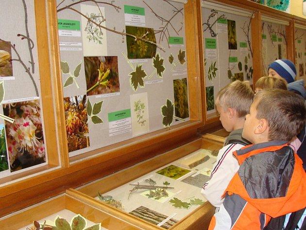 Výstavu nazvanou Stromy parku Michalova zájemci najdou v přerovské Ornitologické stanici.