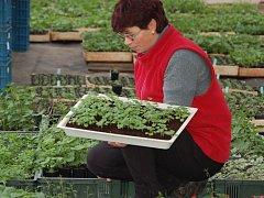 Janu Manovi pomáhá s prací ve sklenících jeho manželka Světlana.