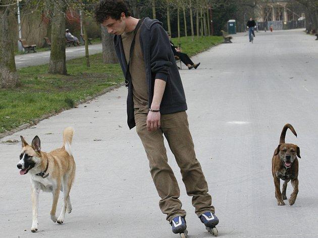 Volně pobíhající psi bez náhubku děsí nejen maminky s dětmi.