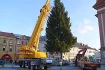 Usazování vánočního stromu na náměstí v Hranicích