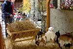 Velikonoce na zámku v Hustopečích
