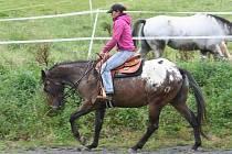 Na koňské farmě rodiny Ryškových v Hluzově na Hranicku už jezdí v sedle i nejmladší z rodu, malá Viki.