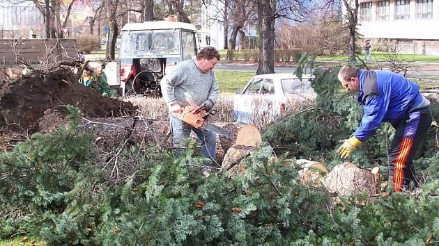 Pracovníci odklízejí spoušť, kterou napáchala sobotní vichřice. V ulici Svisle v Přerově vyrval prudký vítr strom z kořenů.