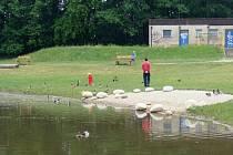 K úplnému odsátí bahna na Velké laguně podle odborníků nemůže dojít. Musí tu zůstat vhodné prostředí pro některé živočichy.