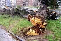 Vichřice Emma měla na svědomí hlavně desítky popadaných stromů.