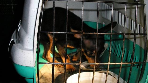 Loni skončila v kotcích městských strážníků asi stovka psů.