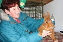 Návštěvníci výstavy králíků v Prostějově si o víkendu mohli vybrat ze dvou desítek plemen.