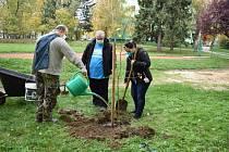 Na ZŠ Struhlovsko Hranice sázeli nové stromy.